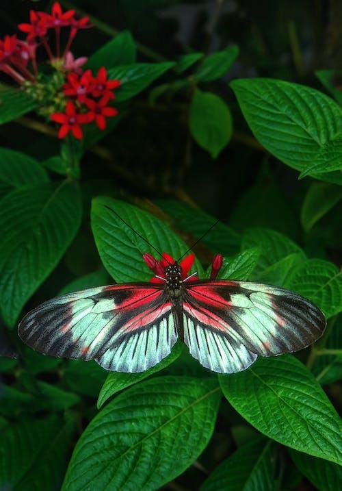 Ingyenes stockfotó kert, levelek, növényvilág, pillangó témában