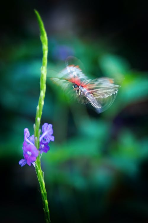Purple Flowers and Mid Air Butterfly