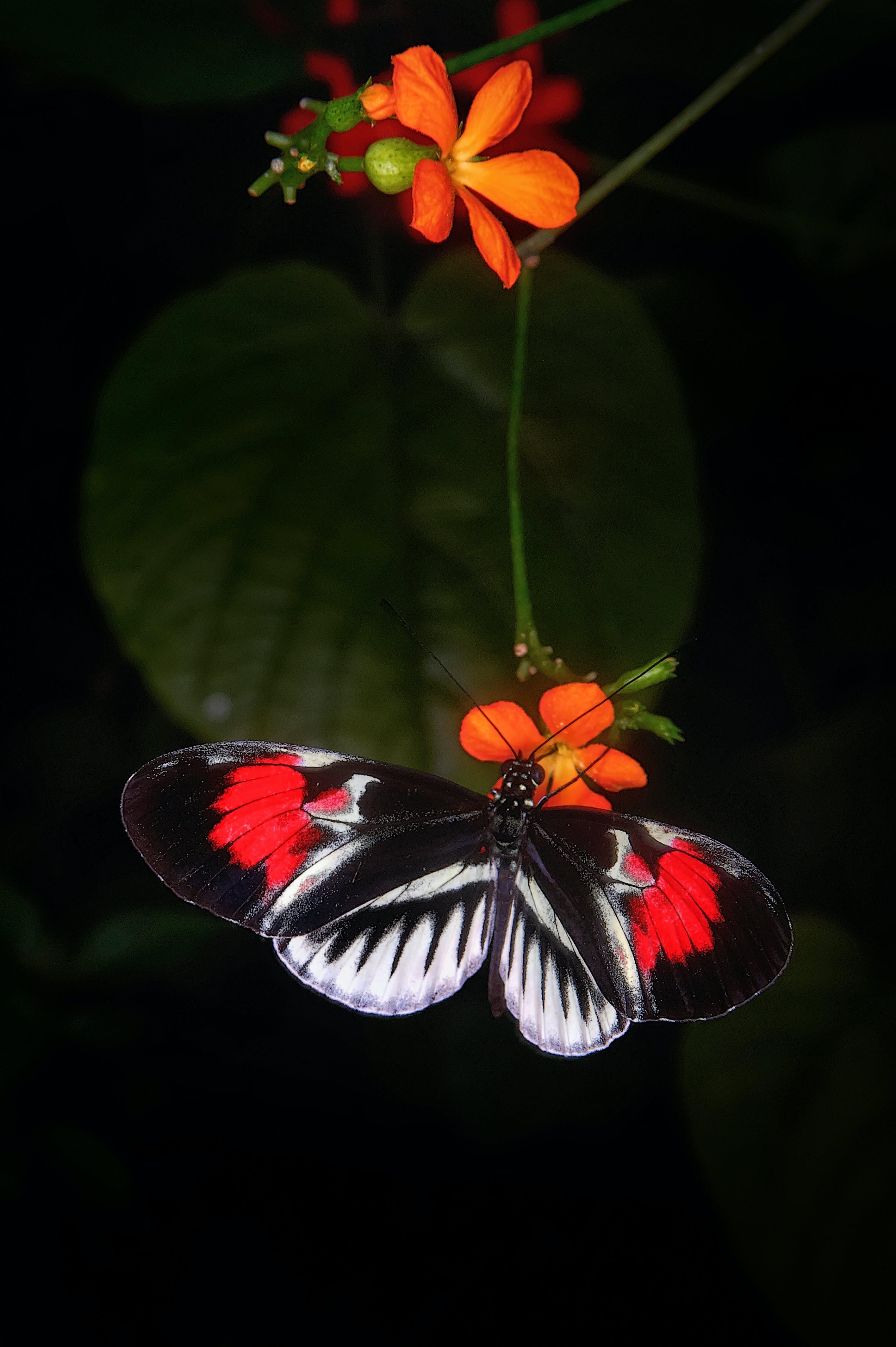 Gratis lagerfoto af bestøvning, blomster, blomstrende, close-up