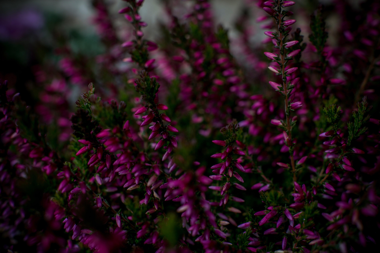 blur, botanical, bunch