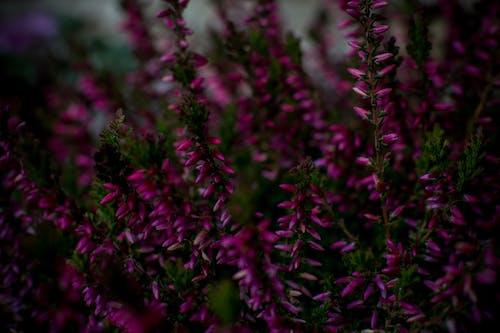 Ilmainen kuvapankkikuva tunnisteilla kasvi, kasvu, kimppu, lähikuva