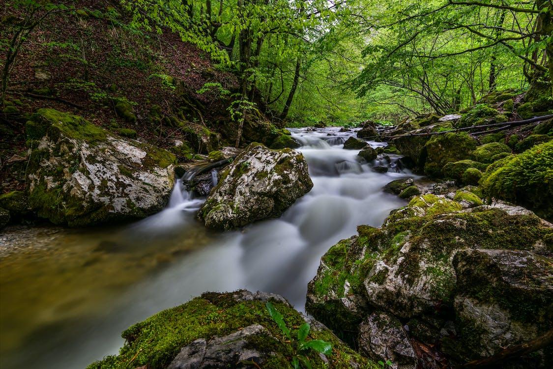 Moss Covered Rocks Beside River