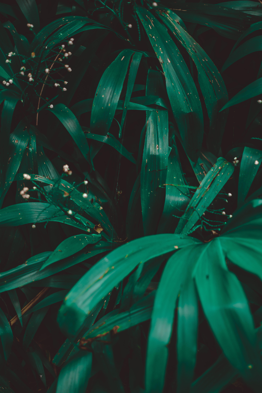 Immagine gratuita di foglie, giardino, impianto, natura