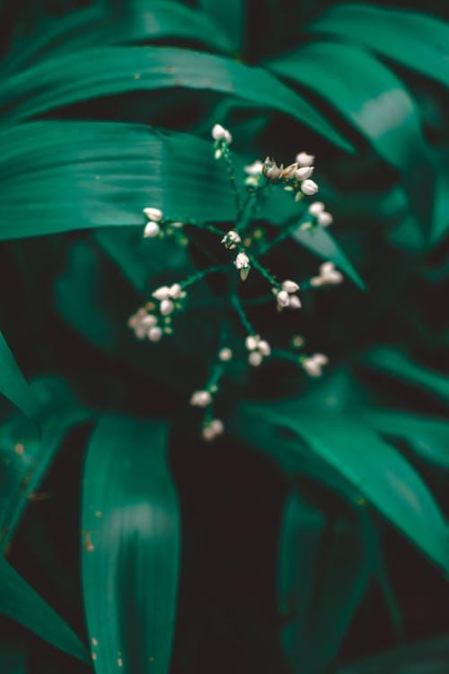 Fotobanka sbezplatnými fotkami na tému exteriéry, farba, flóra, jemný