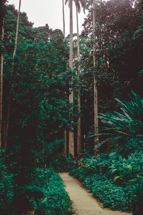 Gratis lagerfoto af dagslys, græs, grøn, have