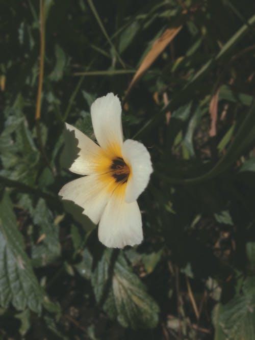 Darmowe zdjęcie z galerii z #mobilechallenge, #natura, #outdoorchallenge, #żółty
