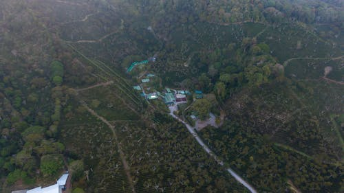 Free stock photo of coffee plantation