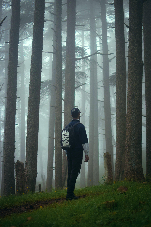 ağaçlar, bir başına, doğa, fotoğrafçılık içeren Ücretsiz stok fotoğraf