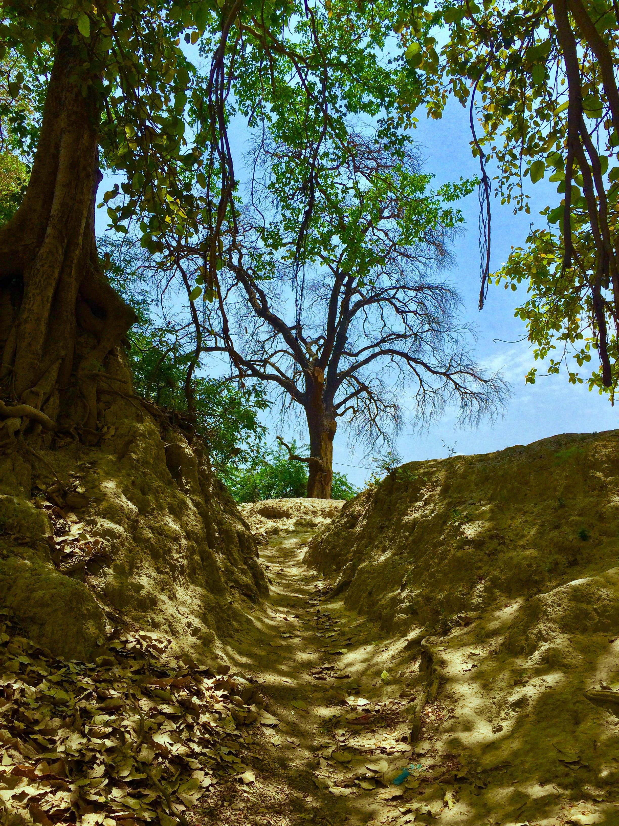 Základová fotografie zdarma na téma les, modrá obloha, příroda