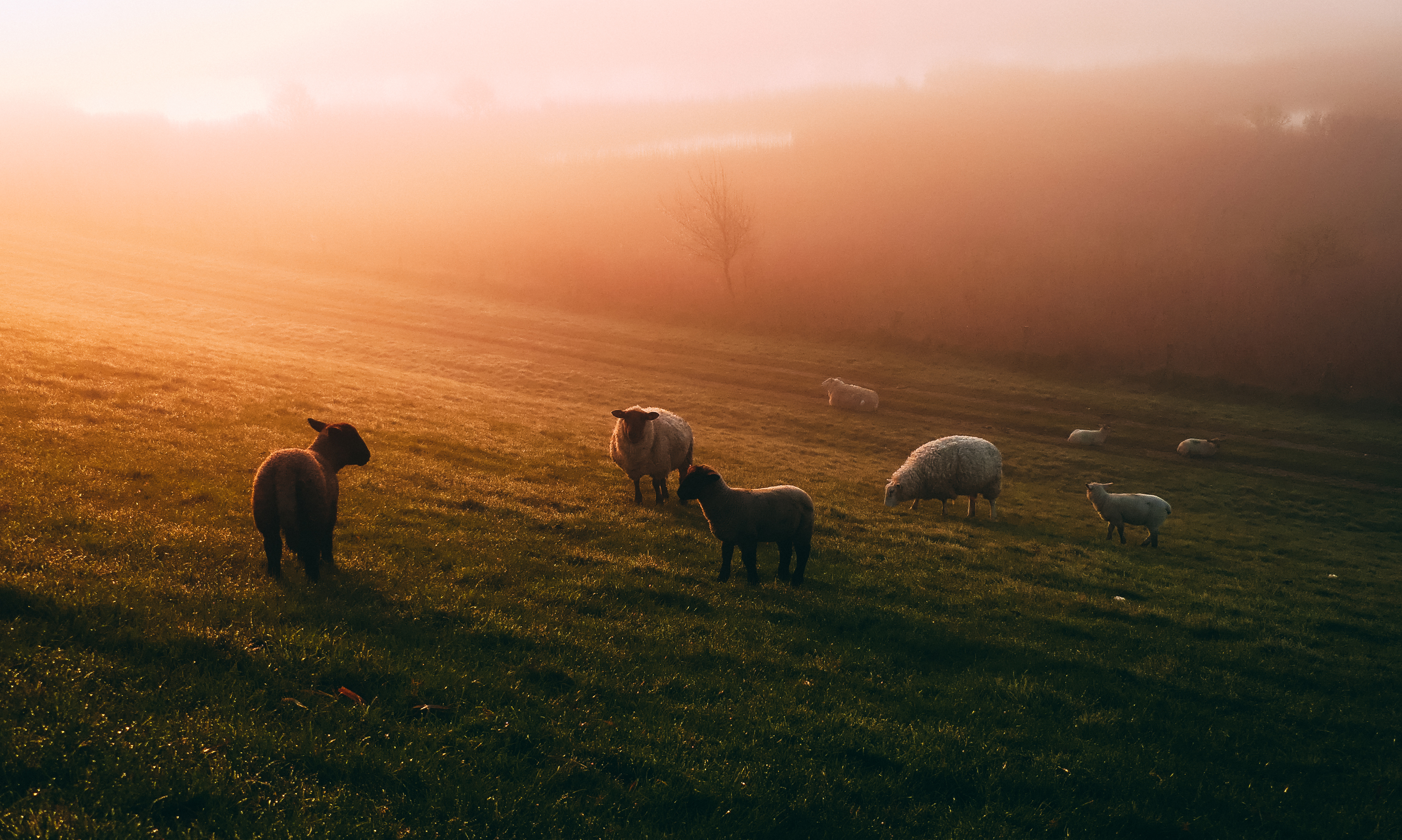 Photo of sheep on field