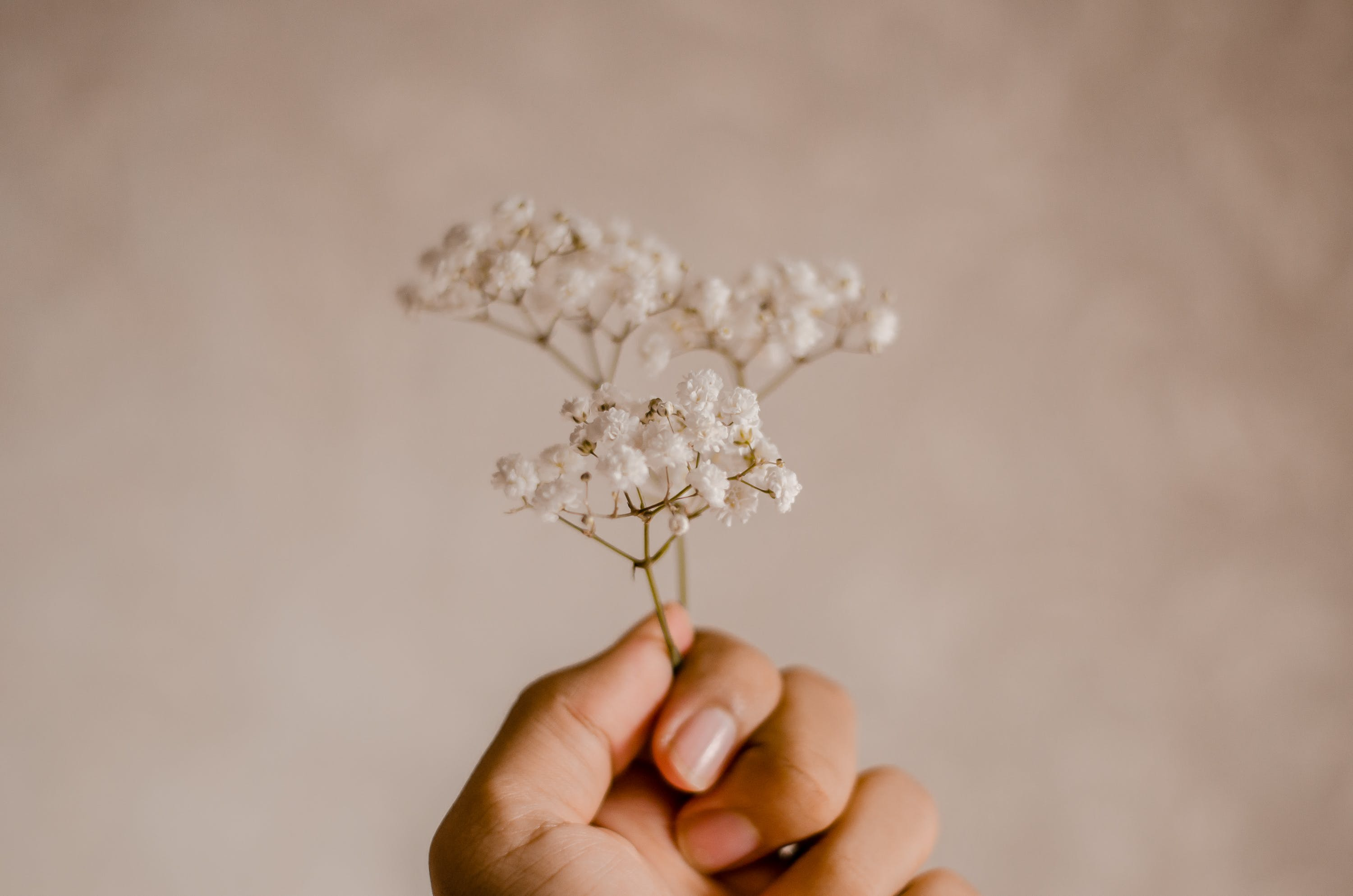 Person Holding White Encrusted Flowers