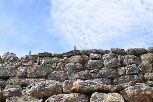 Foto profissional grátis de céu azul, céu de brigadeiro, passarinhos