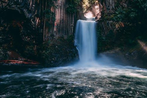 Kostnadsfri bild av grenar, grön, lång exponering, natur