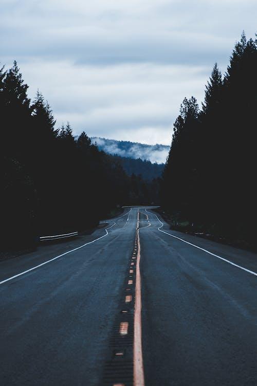 Kostnadsfri bild av asfalt, berg, dagsljus, dimma