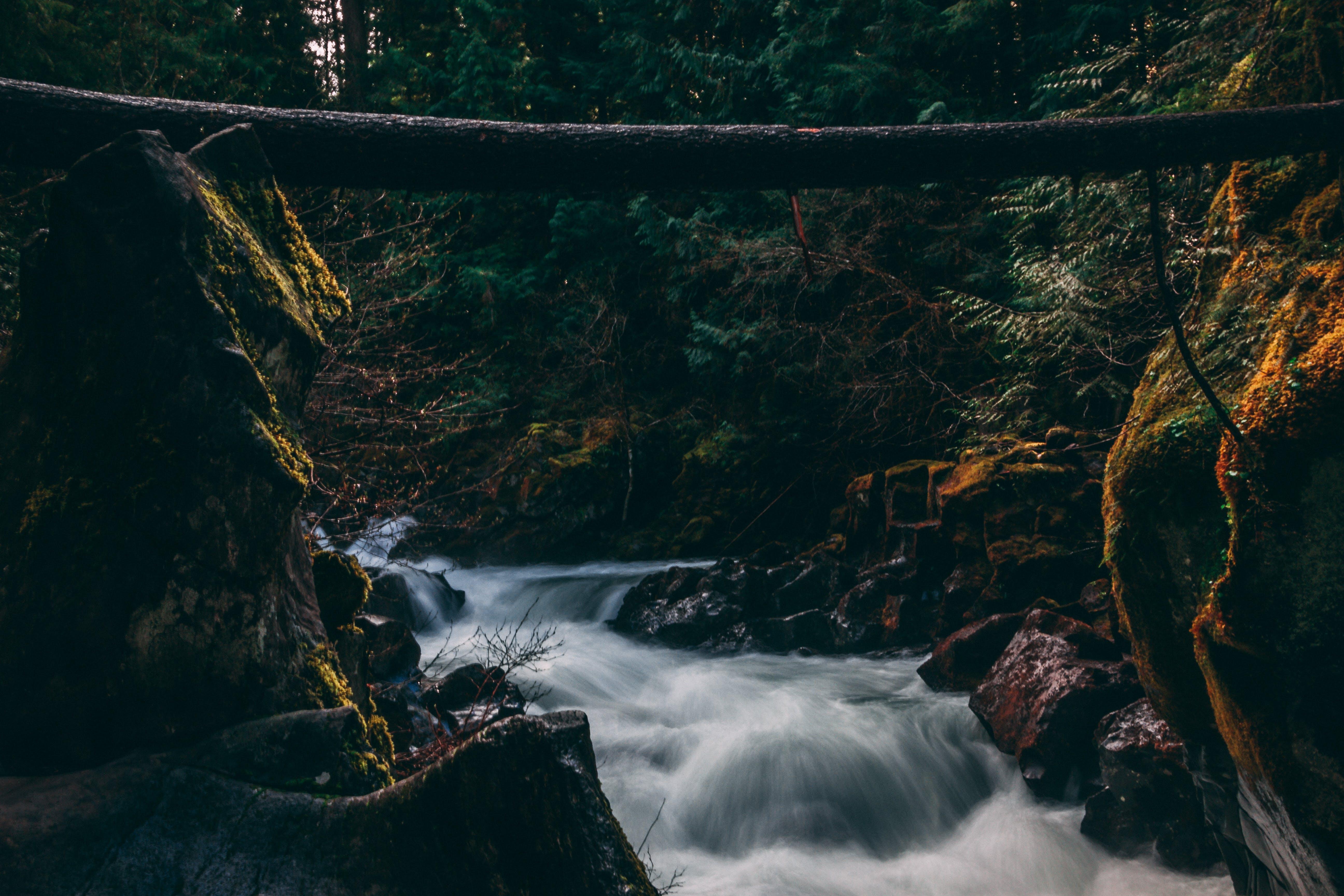 Gratis stockfoto met Bemoste rotsen, beweging, bomen, bossen