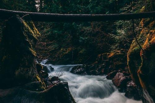俄勒岡州, 光, 公園, 天性 的 免費圖庫相片