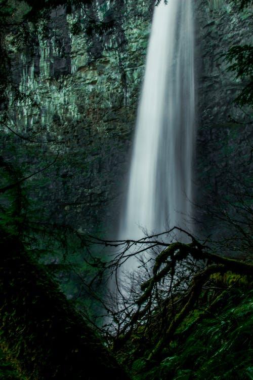 albero, ambiente, cascata