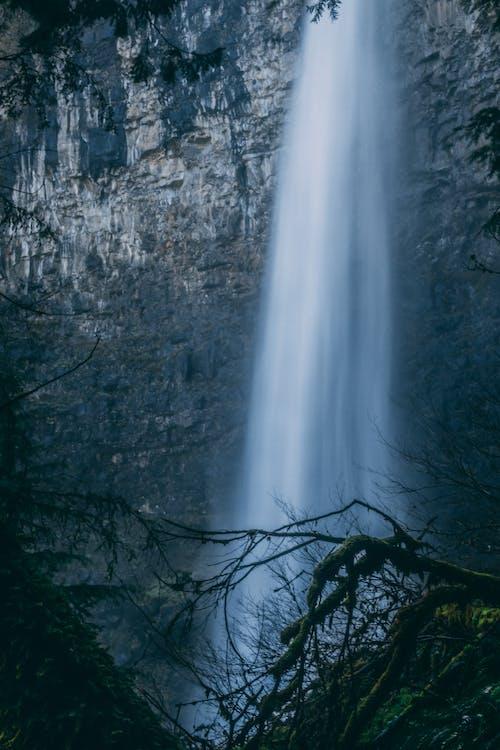 Základová fotografie zdarma na téma dlouhodobá expozice, oregon, příroda, stromy