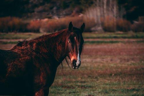 Kostnadsfri bild av huvudbild av häst