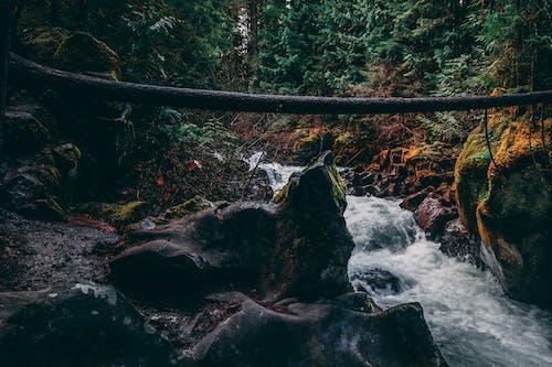 Základová fotografie zdarma na téma jaro, oregon, příroda, řeka