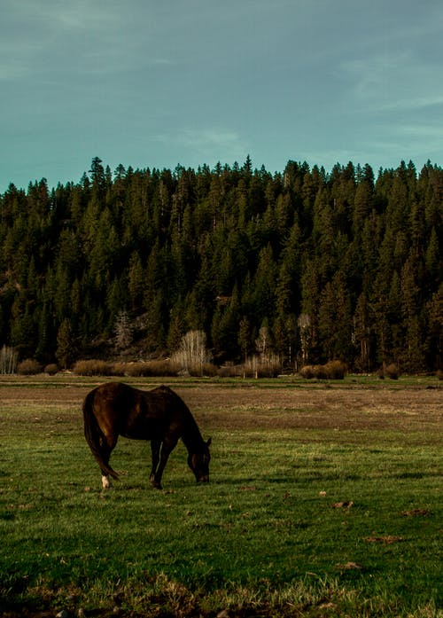 Brown Coated Horse Standing on Grass Field