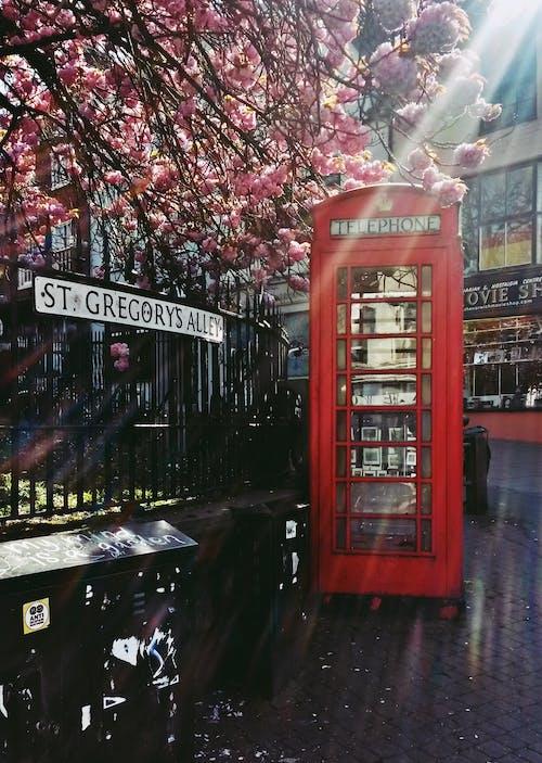Darmowe zdjęcie z galerii z budka telefoniczna, kwiat wiśni, światło słoneczne, ulica