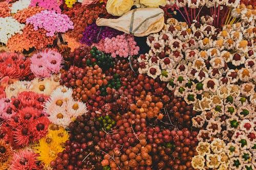 açan çiçekler, Çiçek aranjmanı içeren Ücretsiz stok fotoğraf