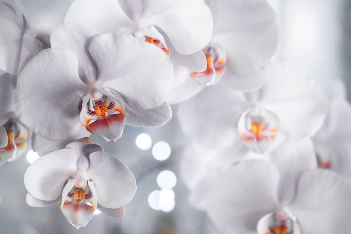 anggrek, berkembang, bunga-bunga