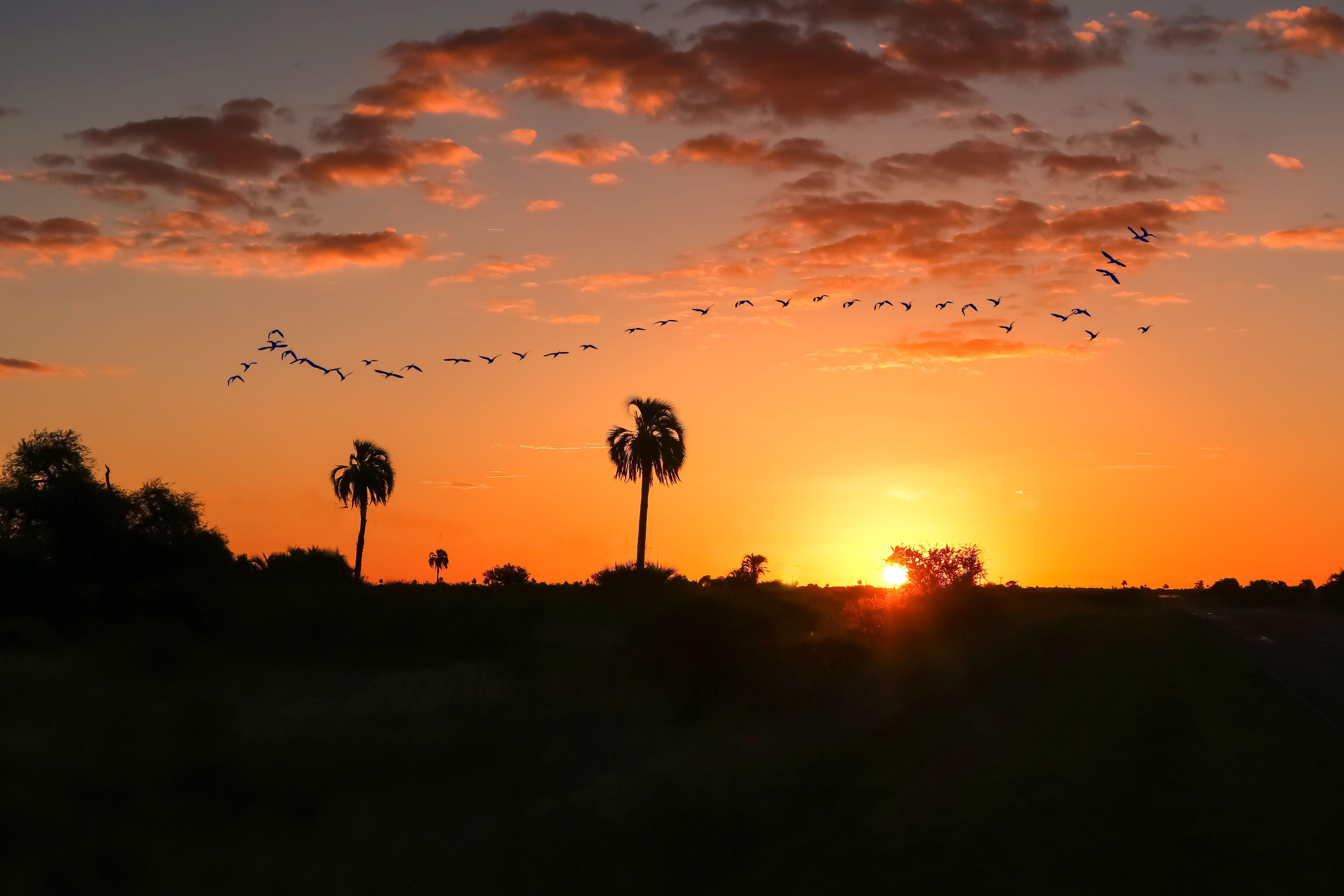 Základová fotografie zdarma na téma barva, hejno ptáků, krajina, létání