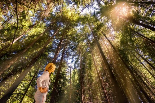 Free stock photo of bosque, efectos solares, fotografía de paisaje, mujer