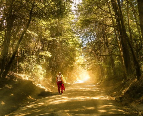 Free stock photo of bosque, bosque otoñal, brillo del sol, con niebla