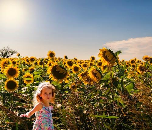 Free stock photo of #niña, campo de girasoles, cielo