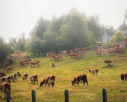 Free stock photo of campo, con niebla, mañana de niebla, paisaje de niebla