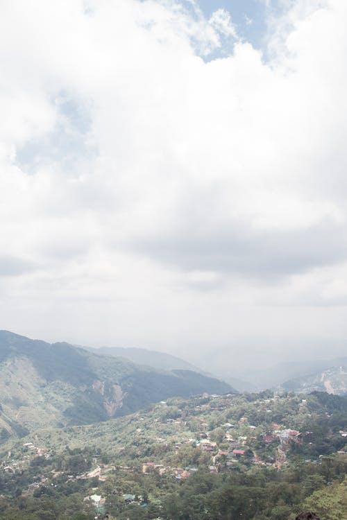 Foto d'estoc gratuïta de arbres, blau, cel, estètic