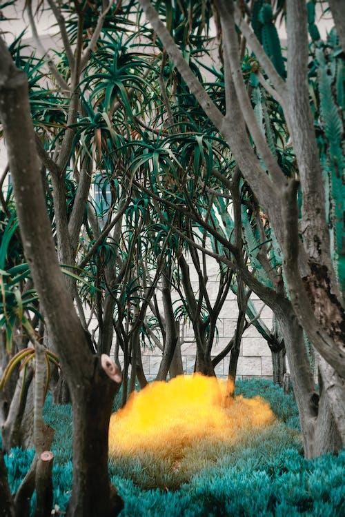 #doğa, acayip, afiş, bitkiler içeren Ücretsiz stok fotoğraf