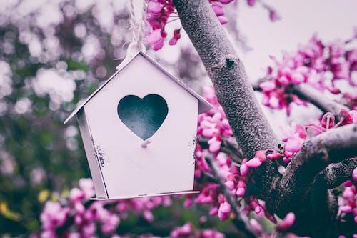Безкоштовне стокове фото на тему «відділення, дерево, флора, шпаківня»