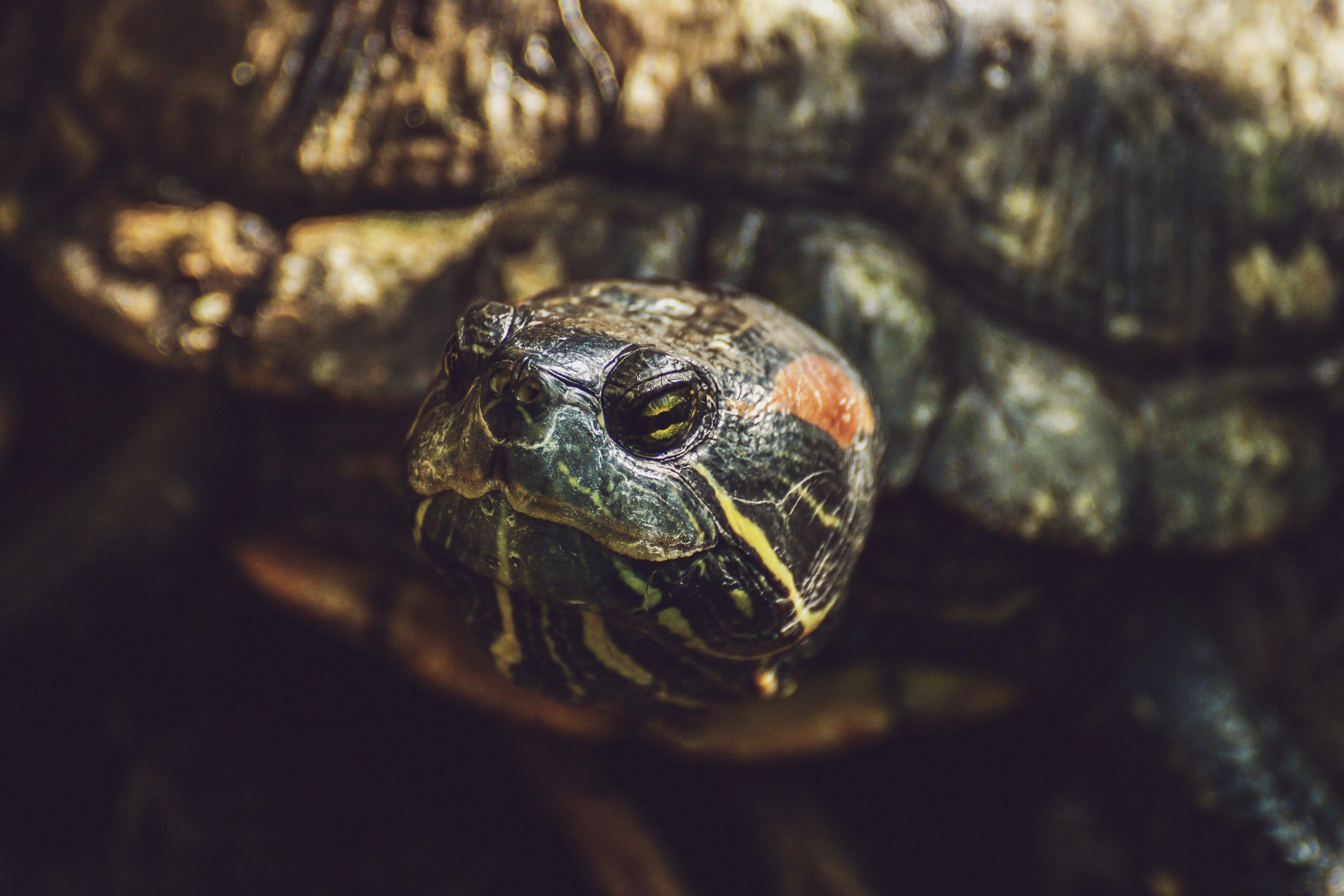 Gratis lagerfoto af close-up, dyr, dyreliv, hoved