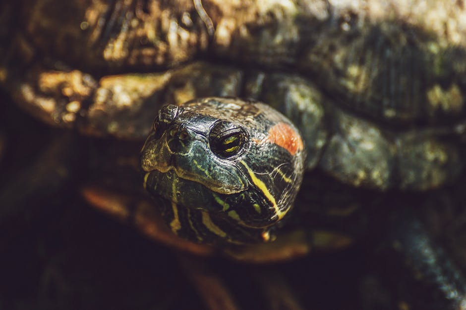 Close up shot of turtle