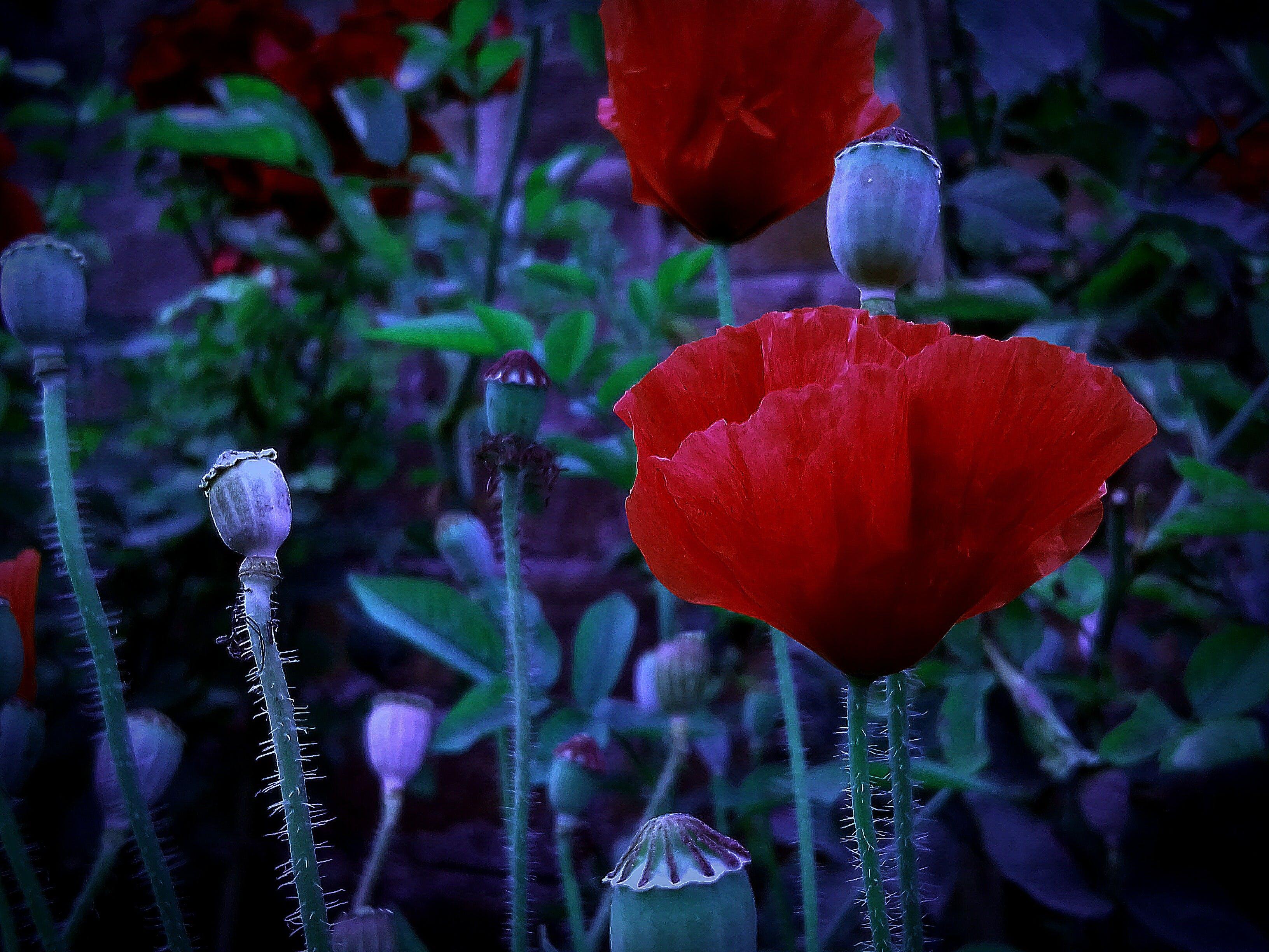 Gratis lagerfoto af 4k-baggrund, baggrundsbillede, blå baggrund, blomst