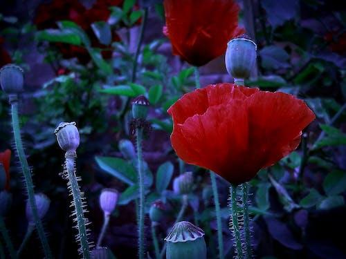 Ingyenes stockfotó 4k-háttérkép, asztali háttérkép, Első virágok, gyönyörű virág témában