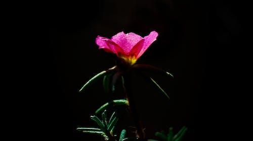 Ảnh lưu trữ miễn phí về #thiên nhiên, cuộc sống tự nhiên, Hình nền 4k, hình nền hoa