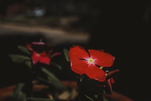 Ảnh lưu trữ miễn phí về #nước, #thiên nhiên, chậu hoa, Hình nền 4k