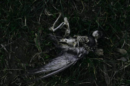Imagine de stoc gratuită din decedat, măcinare, moarte, pasăre