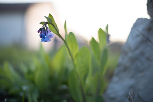 Ilmainen kuvapankkikuva tunnisteilla flor, kasvikunta, kasvit, kauniit kukat