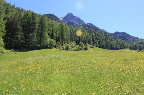 Free stock photo of 4k wallpaper, austria, beautiful landscape