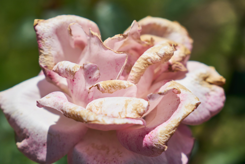 Free stock photo of background, bloom, blossom, botanic