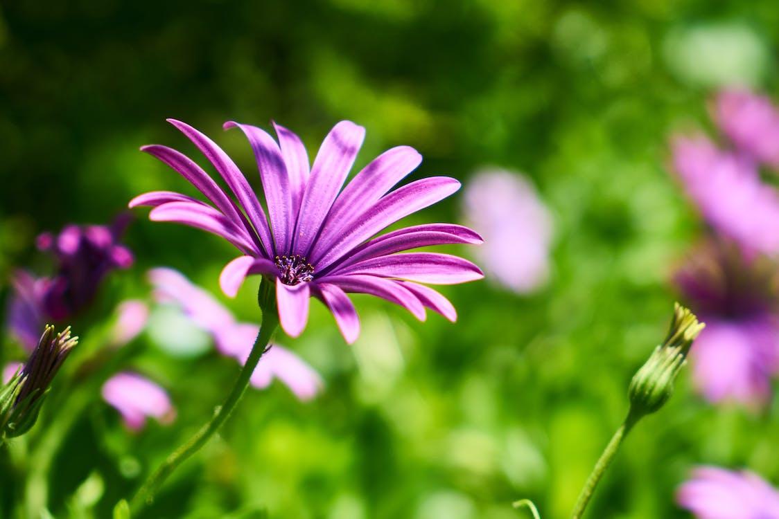 crecimiento, detalle, flor