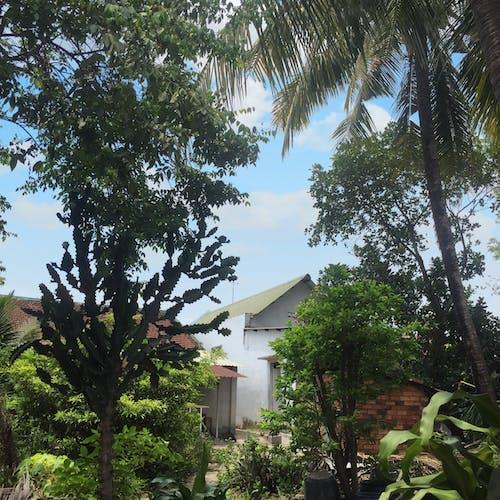 Foto d'estoc gratuïta de #mobilechallenge, #naturalesa, #outdoorchallenge, #vietnamese