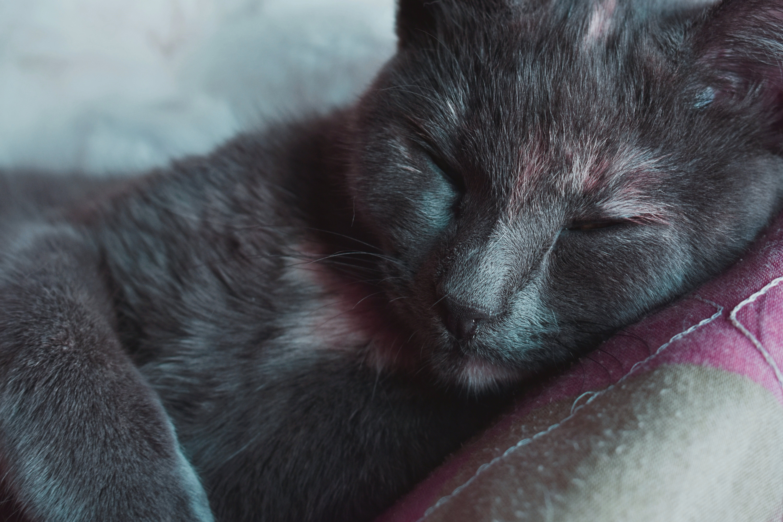 Fotos de stock gratuitas de animal, bote, doméstico, fotografía de animales