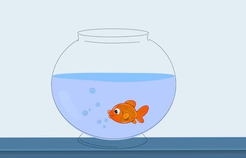 Free stock photo of aquarium, aquatic, bowl, caribbean